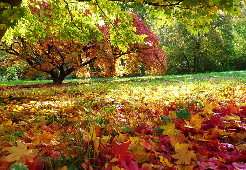 Selling your home in the autumn